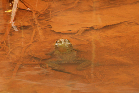 Frog Attempting To Live With Leachate