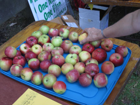 Free Apples For Health At The BNP Table