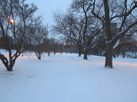 Trees In Lincoln Park, Dawn, January, Snow